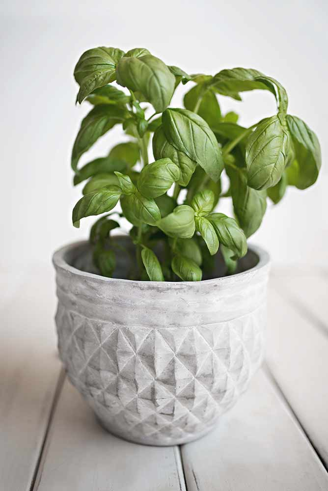 Image of basil leaves used in a blog post by forthefloorandmore.com