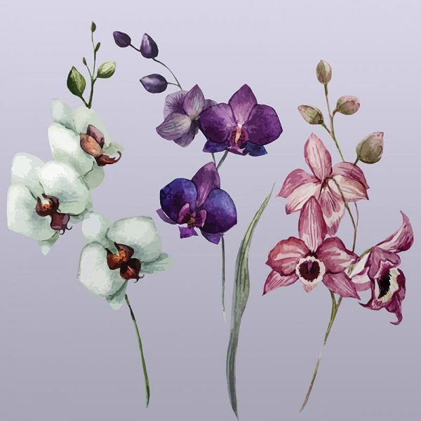 Image showing Camille large scale floral pattern design from forthefloorandmore.com