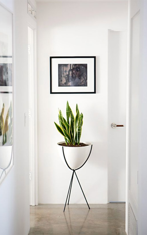 Image of House plants in the hallway used in a blog ppst by forthefloorandmore.com
