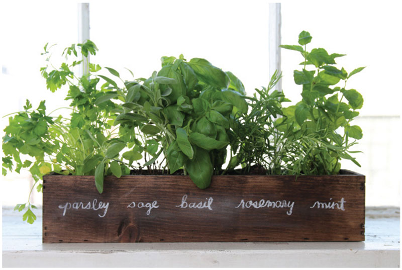 An image of an indoor herb garden from a farmhouse kitchen inspiration blog post about getting that rustic farmhouse look by forthefloorandmore.com