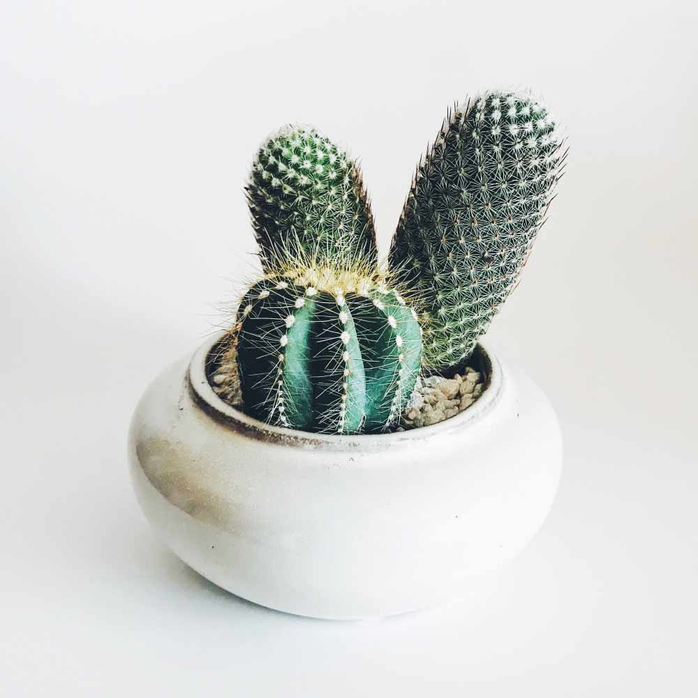 Image of cacti houseplants used in a blog post about summer home decor ideas from For the Floor & More